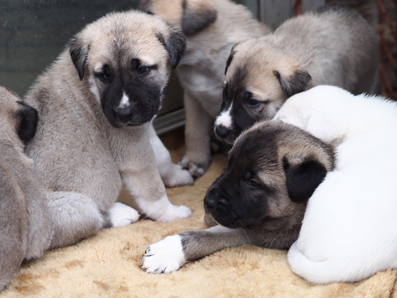 puppies6